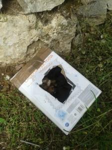cani abbandonati esperia 2